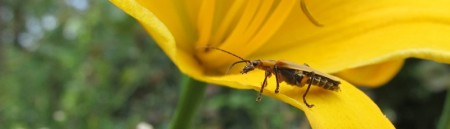 bug-on-yellow-flower-2012-06-1000x288.jpg