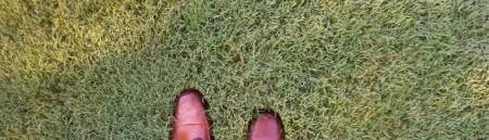grass.2012-06-07-1000x288.jpg