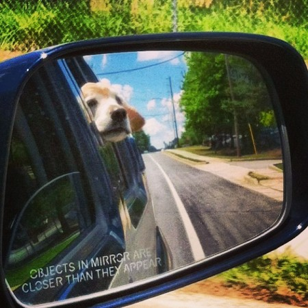 CAUTION: DOG IN MIRROR MAY BE HAPPIER THAN APPEARS
