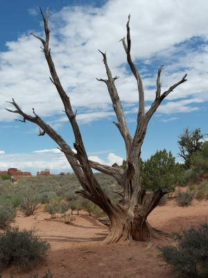 Dead Tree at Sand Dune Arch