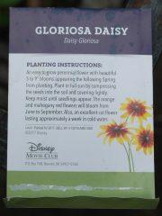 Disney daisy seed instructions